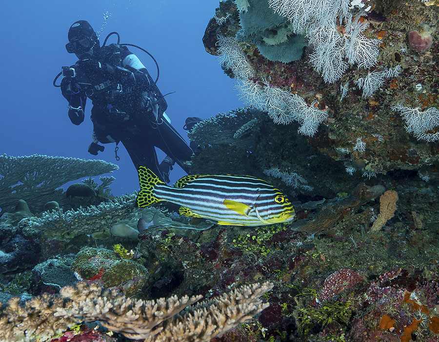 Diving Comoros - Marine Park off Moheli