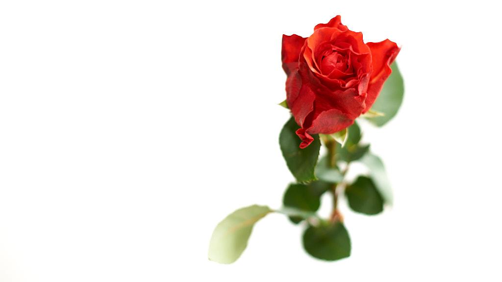 040-2014 Valentijn