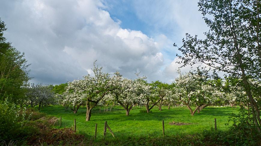 134-2013 Appelbomen van Coelhorst