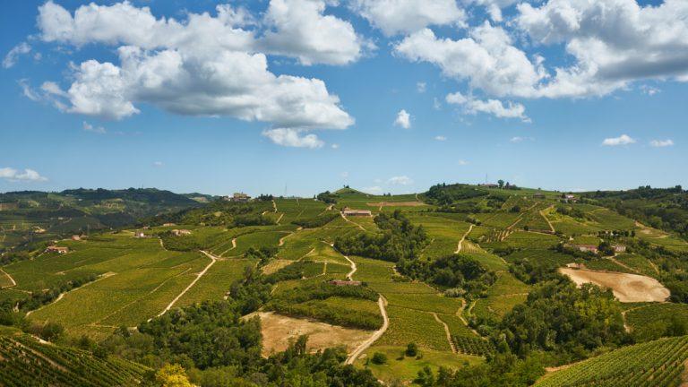 Vallei met wijnranken in Piëmont