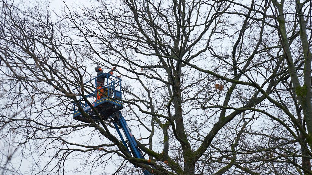 013-2015 De bomenkapper