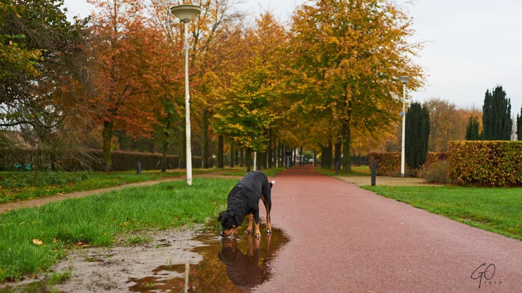318-2014 Herfst in Hoogland