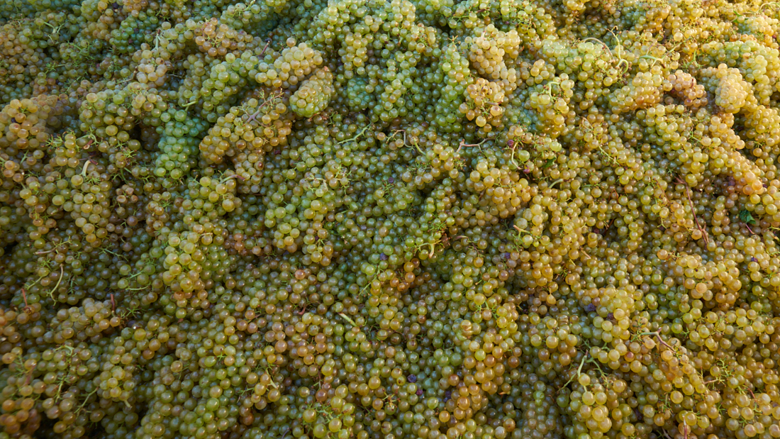 De blend van Steinbeck en Pavese featured image druiven