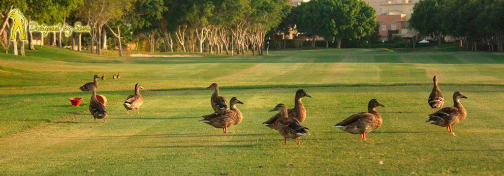 Denna bild har ett alt-attribut som är tomt. Dess filnamn är Alicante-golf-1024x358.jpg
