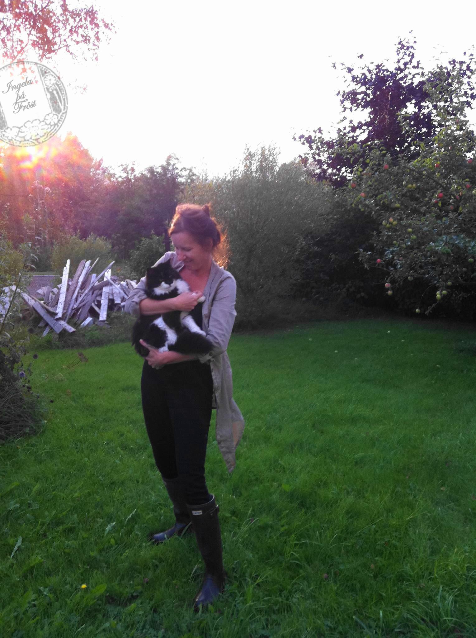Max-katten. Katter barometer inredare hemliv