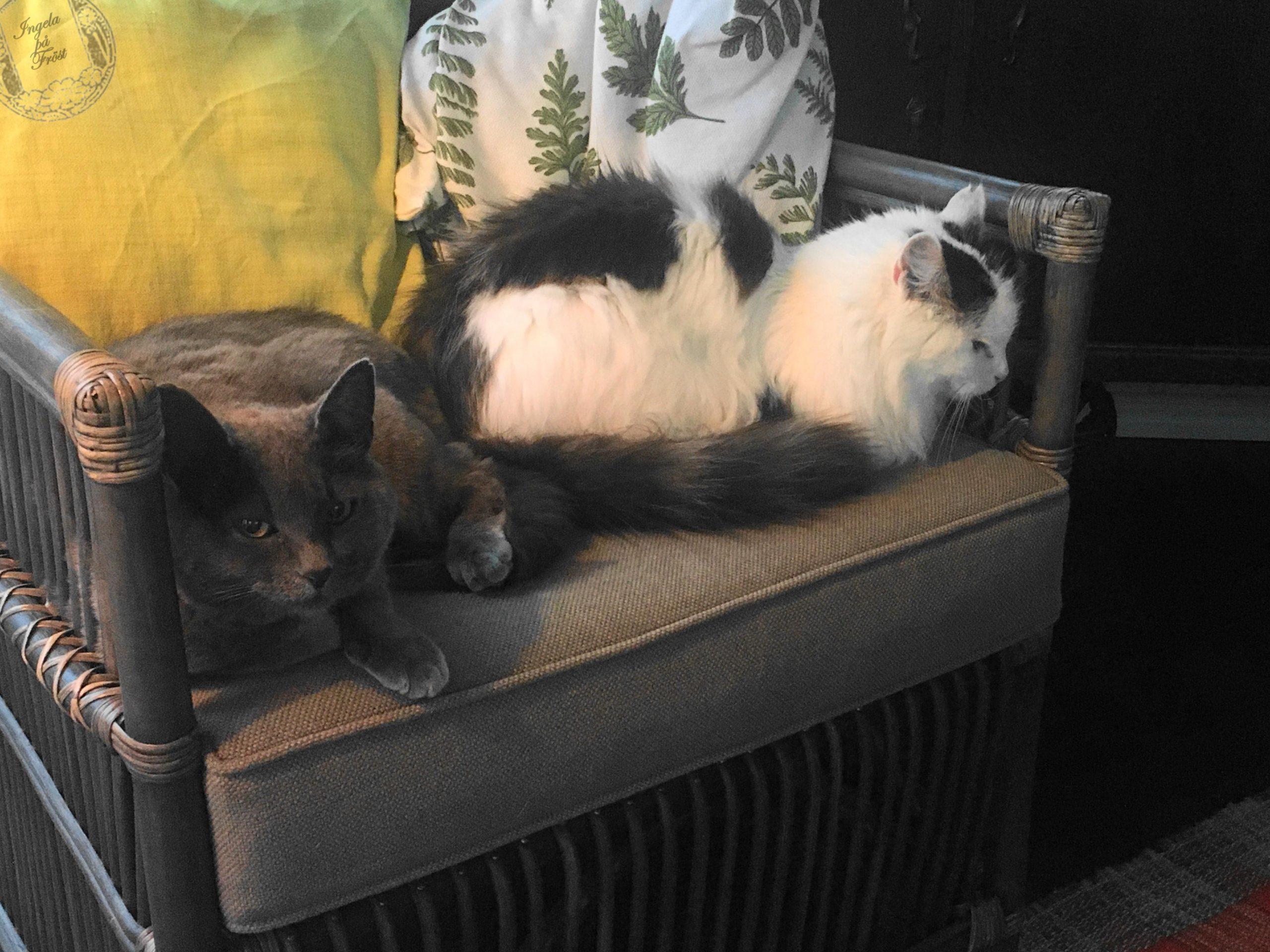 Systrarna Morris & Tassan Katter barometer inredare hemliv