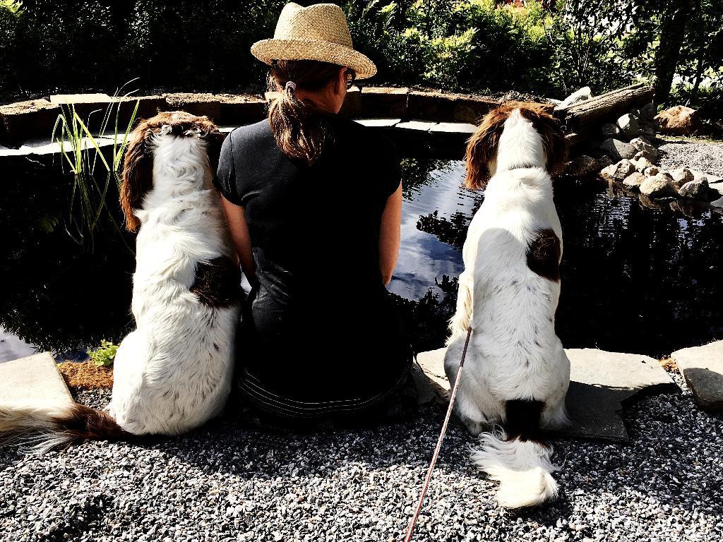 Jag och mina älskade hundar spanar efter fiskar. Att anlägga och bygga en dammen