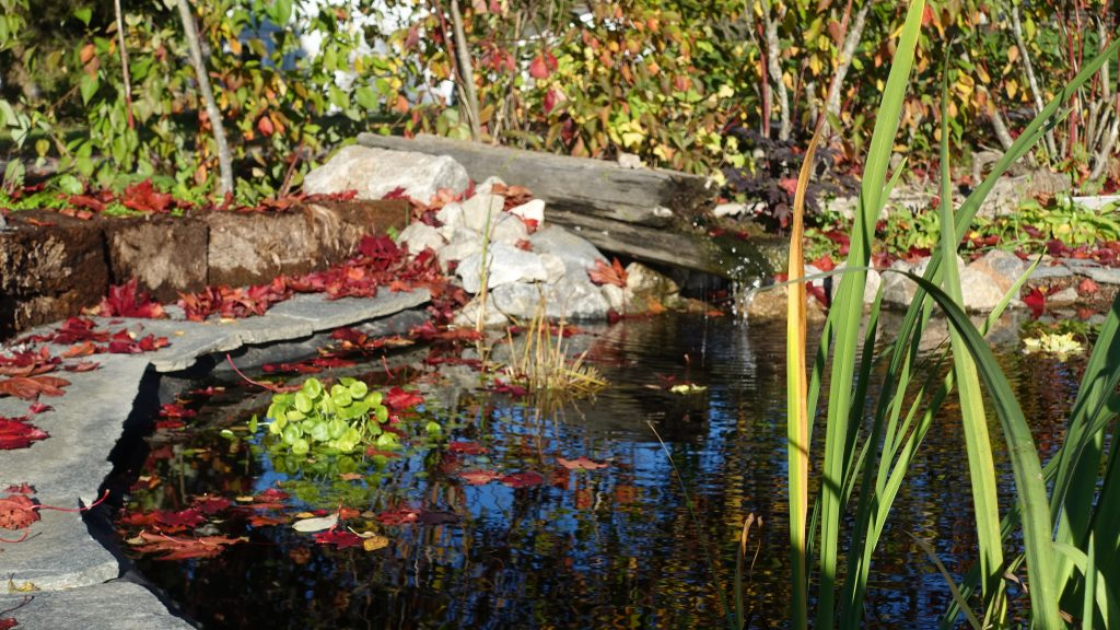 Dammen. Klimatsmart trädgård hållbart