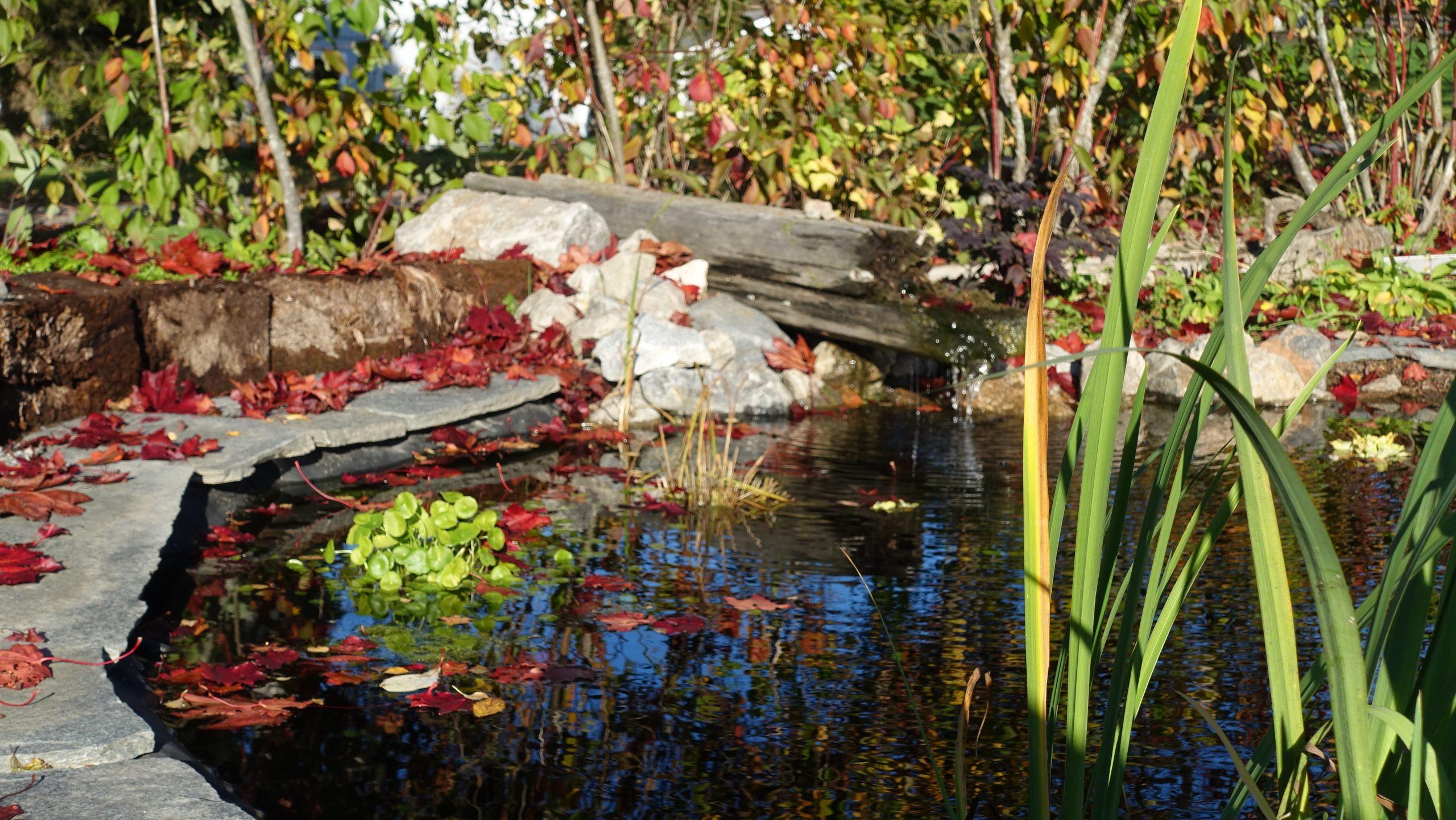 Trädgårdens damm. Trädgård husköp planlösning