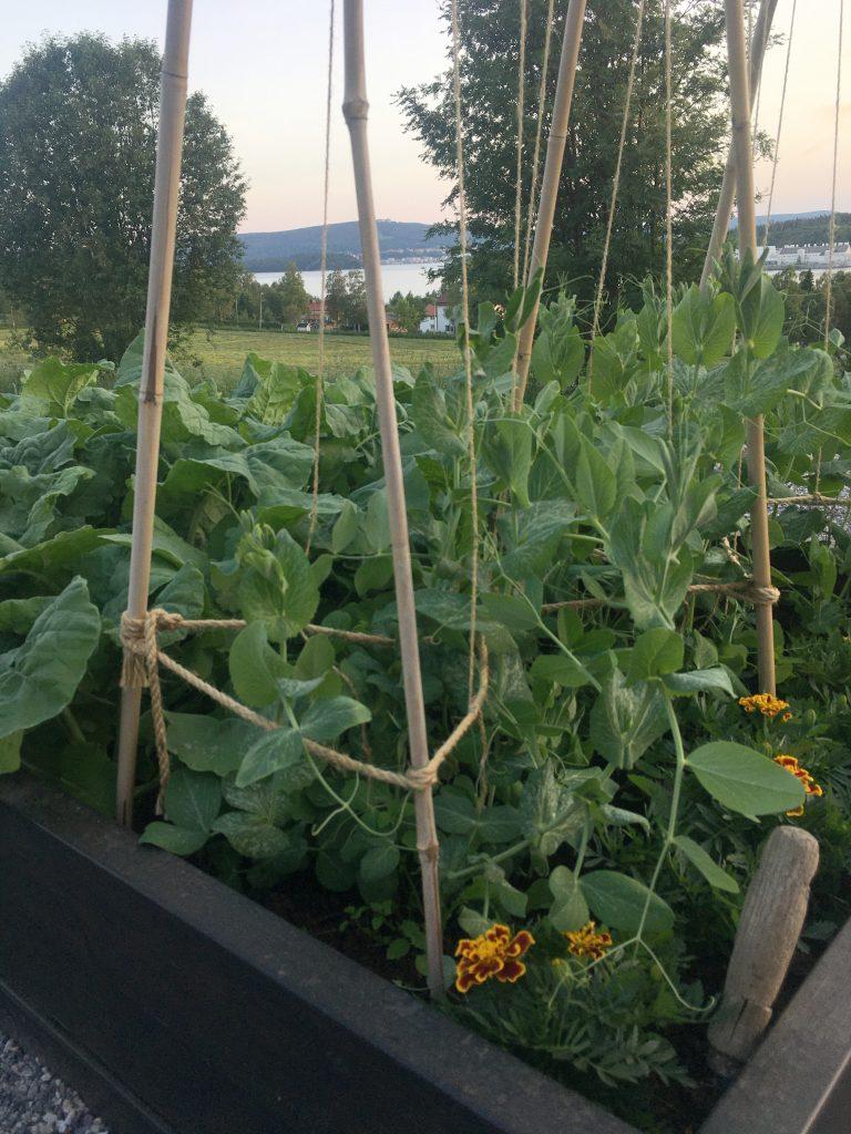 Grönsakslandet 2020. Spade Projekt i landen