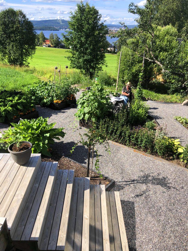 Kontoret i trädgården. Odlingsåret av grönsaker 2020