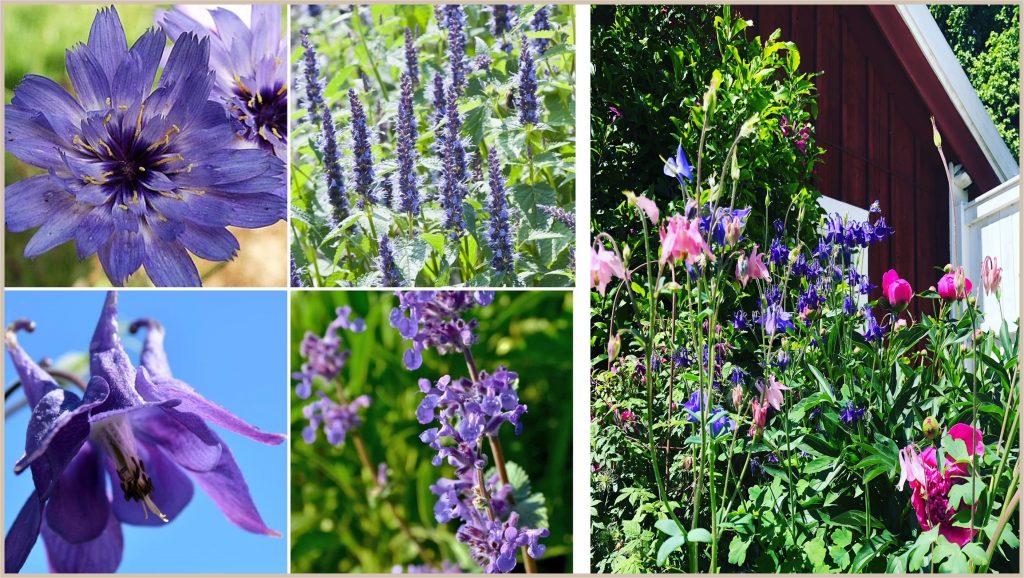 Ton-i-ton i rabatterna. Cottage garden för  blom- färgälskaren