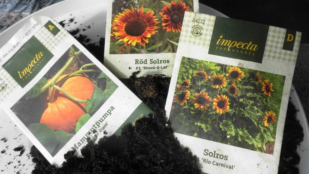 Solrosor och pumpa. fröpåsen jorden odling trädgårdens