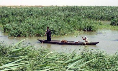 الاهوار العراقية في المطبوعات الغربية .. رؤية غربية، مراجعة عراقية