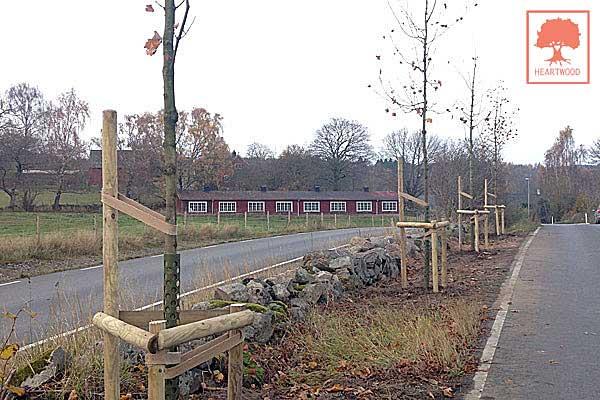HEARTWOOD | ISA-certifierad arborist | Föredrag - trädvård, trädbeskärning, trädsjukdomar