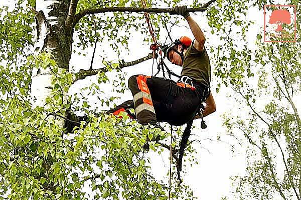 Arborist i Skåne - Heartwood