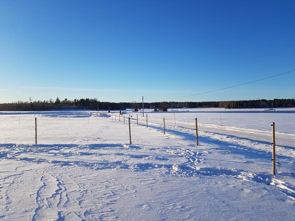 Bild föreställande vinter i en hästhage en januaridag.