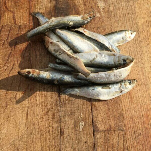 Whole Oily Fish 1KG