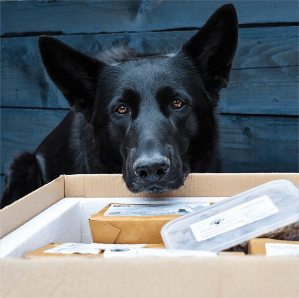 Black Dog with Nose in Box