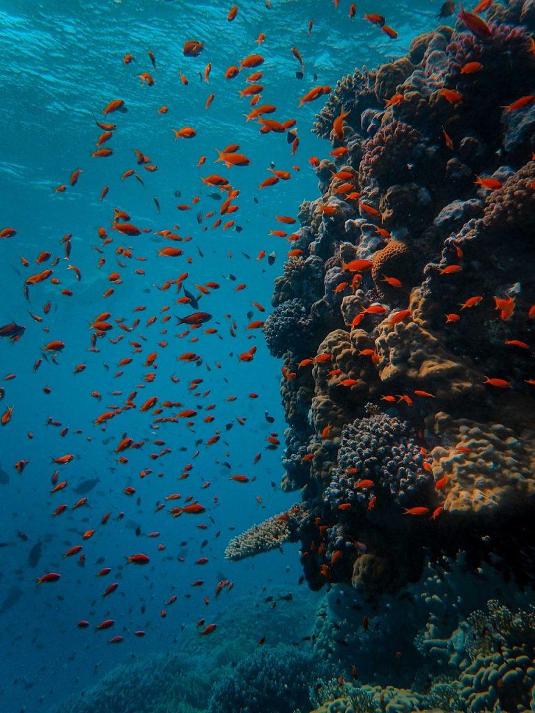 underwater, coral, fish-5310424.jpg
