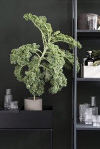 groen in keuken