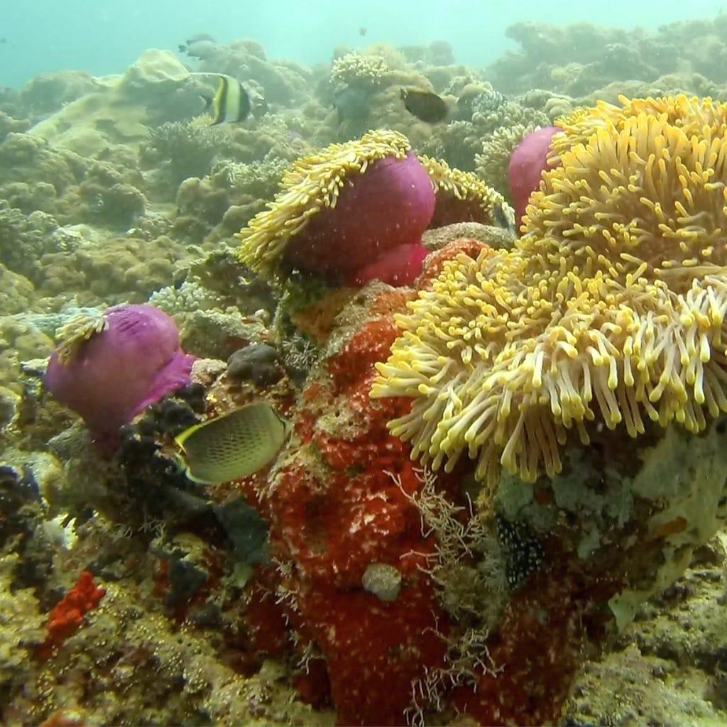 Open Water Diver duiken en padi duikopleidingen ids dendermonde