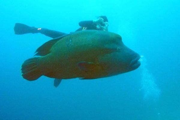 Advanced open water duiken en padi duikopleidingen ids dendermonde