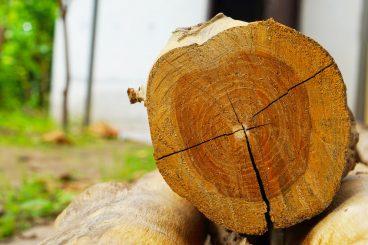trästock som ligger i skog