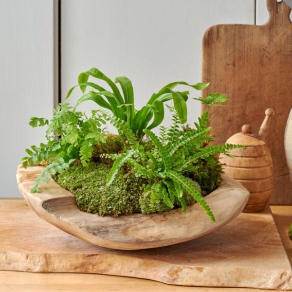 träskål med gröna växter i