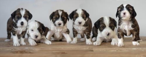 montage puppy's