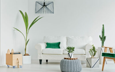 Så transporterar du krukväxter när du flyttar till en ny lägenhet