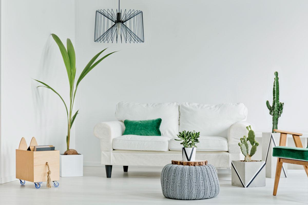 Så transporterar du krukväxter när du flyttar till en ny lägenhet Jordgubbsprinsen flyttfirma