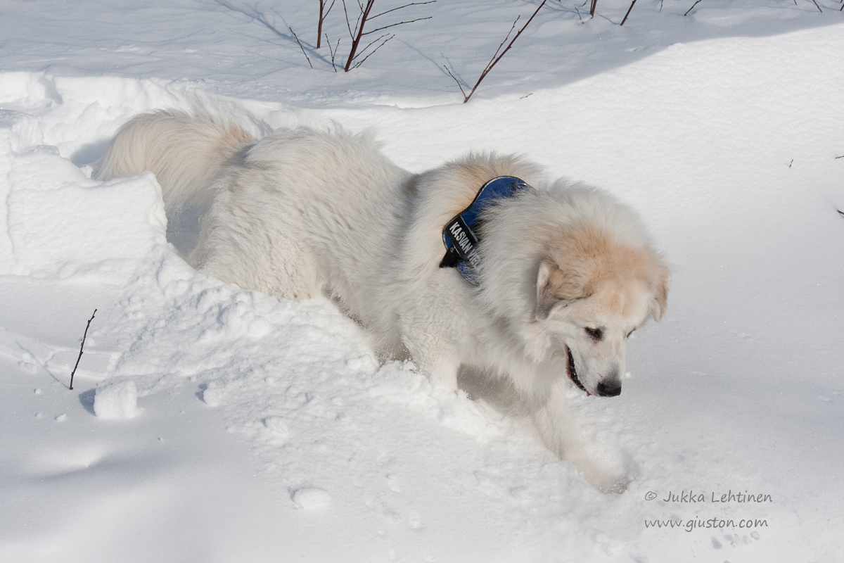 Giusto in the snow