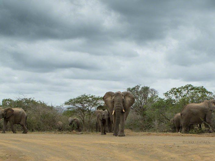 South Africa, Elephant