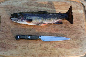 """rainbow trout 80339 1920 e1592829084545 360x240 - Zestaw grillowy """"Towarzyska Rybka"""""""