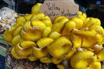 """yellow 790595 360x240 - Panierowane boczniaki z """"gruzińską solą"""""""