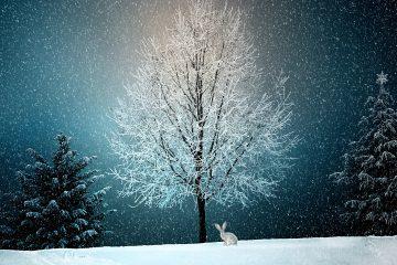 winter 2896970 360x240 - Boże Narodzenie - wierzenia i tradycje