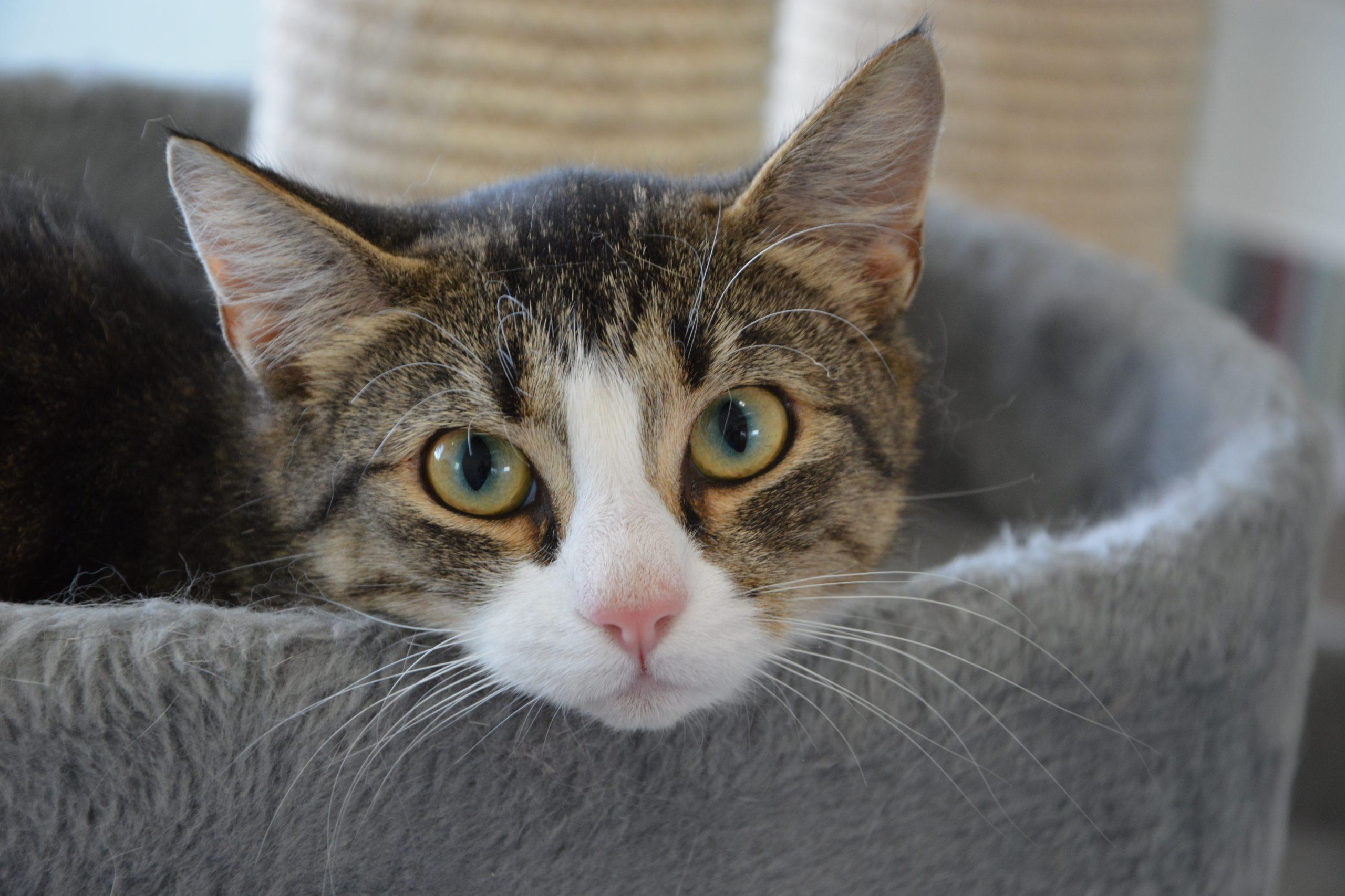katter utan hem