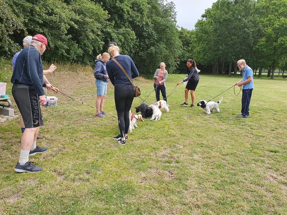 hundetræning hvalp træning
