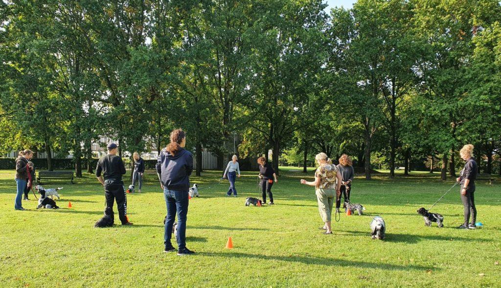 hvalpetræning hundetræning amager københavn