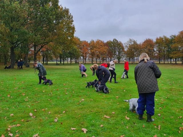 hundetræning amager hvalpetræning