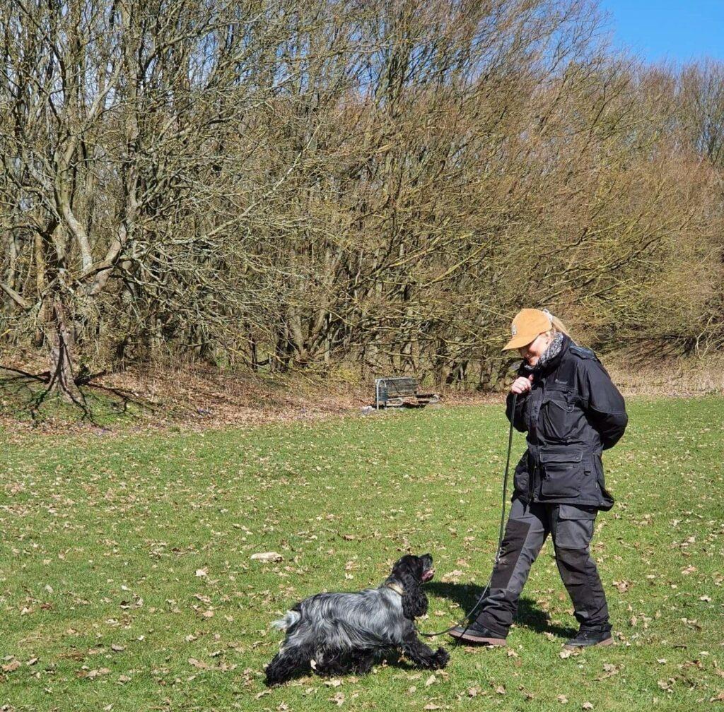 hundetræning amager hund træning hvalpetræning