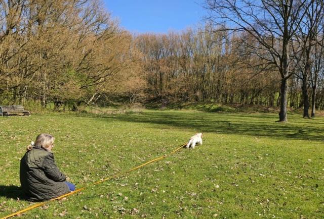 hundetræning amager hvalpetræning hund træning