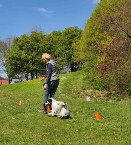 Hundetræning amager hvalpetræning københavn