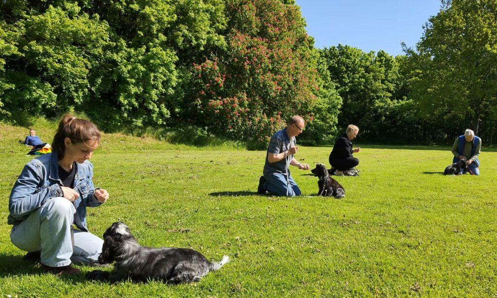 hvalpetræning amager hundetræning københavn