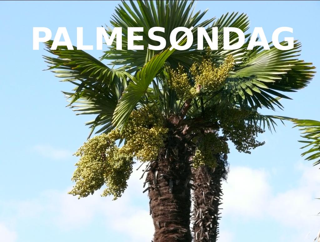 Lyt til Palmesøndags Gudstjeneste