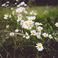 blommor och korsord