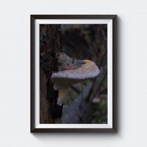 Mystisk poster med svamp på träd.