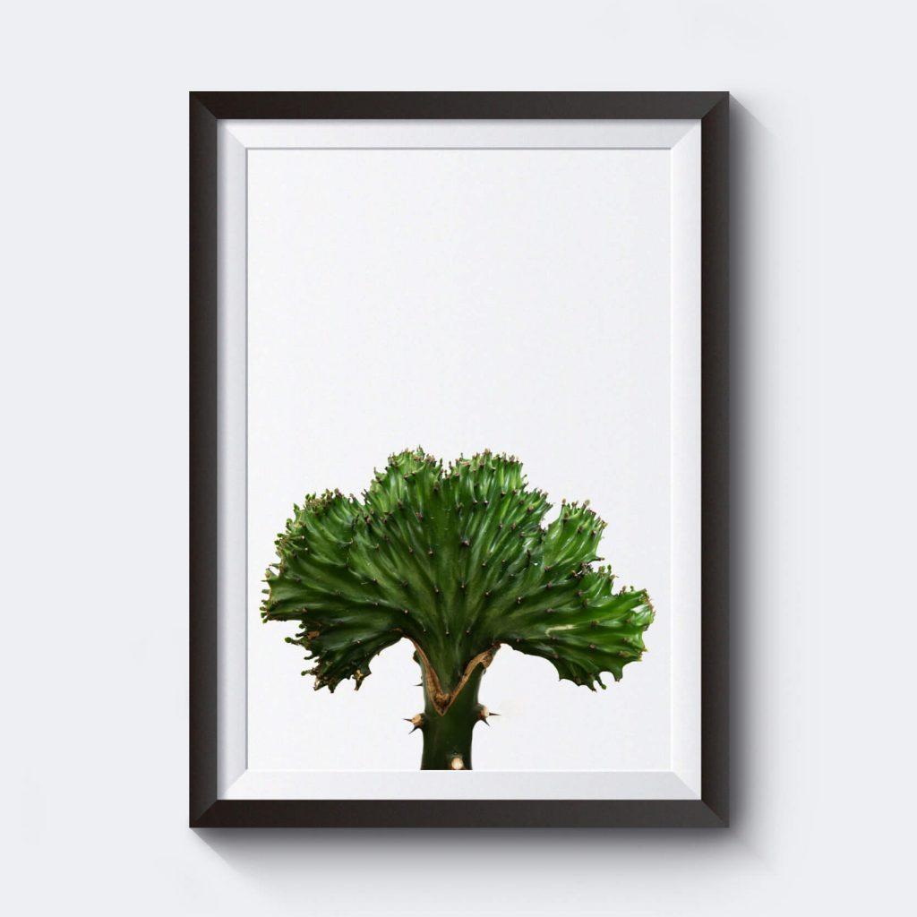 Affisch med kaktus som motiv.