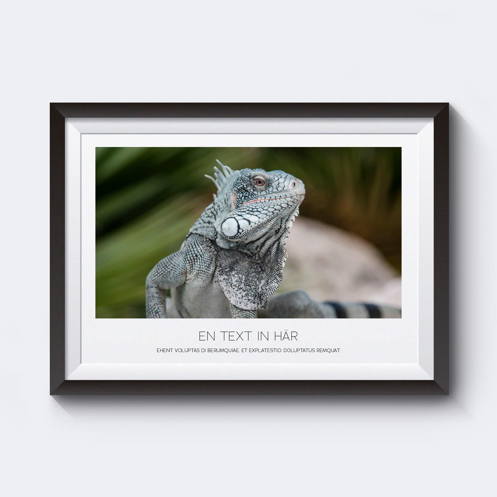 Gör en personlig poster med egen text av ett motiv på en ödla från Karibien.